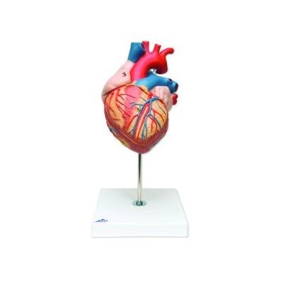 Coração – 2 Vezes o Tamanho Natural – 4 Peças