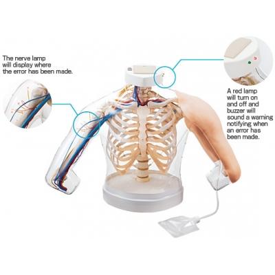 Modelo Combinado: Parte Superior do Braço para Treino das Injeções Intramusculares
