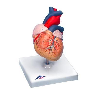 Coração Clássico com Timo – 3 Peças