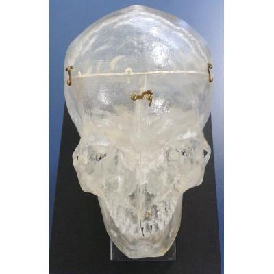 Modelo de Crânio Transparente