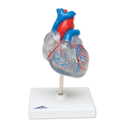 Coração Clássico com Sistema Condutor – 2 Peças