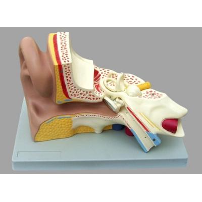 Modelo de ouvido