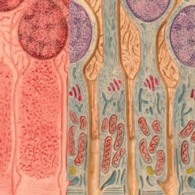 3B MICROanatomy™ - Estrutura Olho