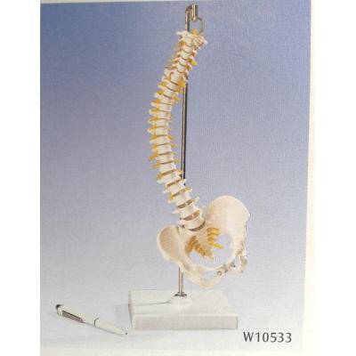 Modelo de mini coluna vertebral