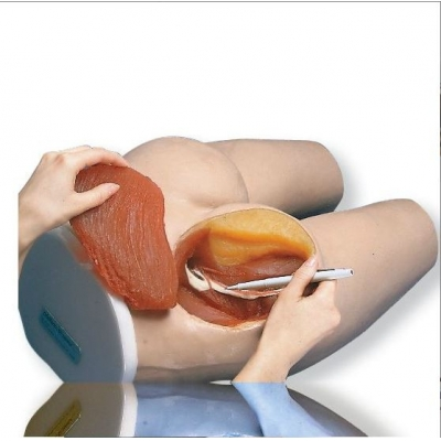 Simulador para Injeções Intramusculares