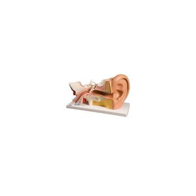 Modelo de ouvido, 3x tam. natural, 4 partes