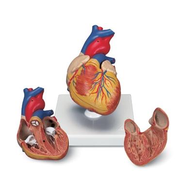 Coração Clássico – 2 Peças