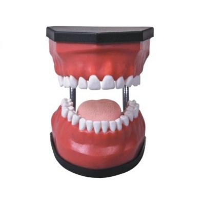 Modelo de cuidados dentais